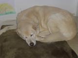 Dexter Dog at Rest