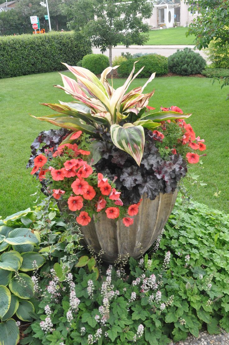 Surround your planter with a ground cover.