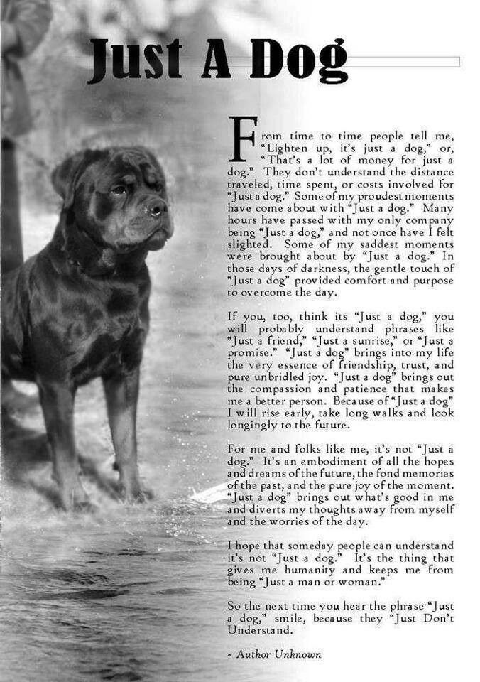 """Just A Dog It is a stab to all dog lovers hearts when we are told our precious four legged family member is """"just a dog"""" Rottweiler"""