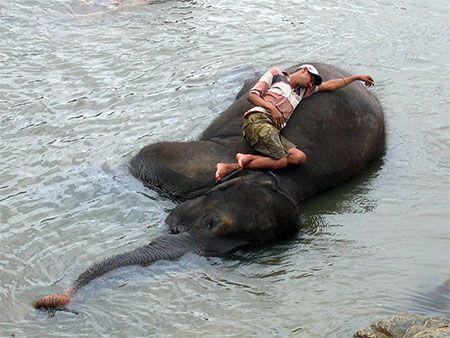 La sieste du cornac - Sri Lanka