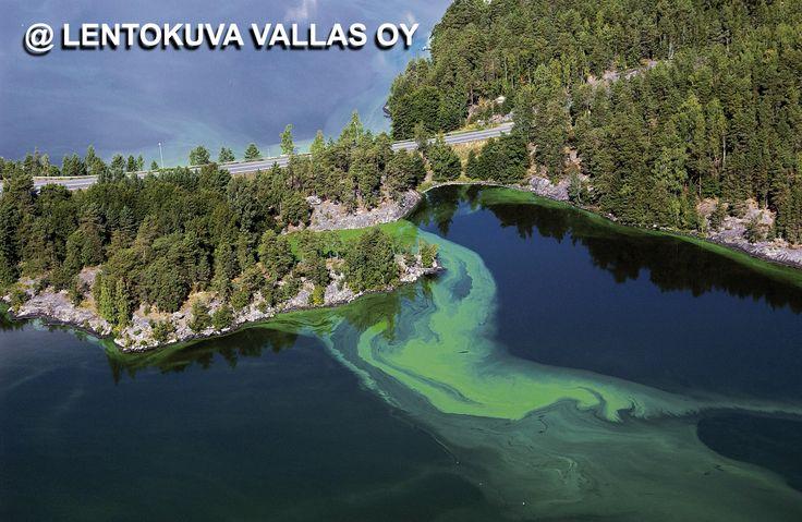 Sinilevää järvessä Ilmakuva: Lentokuva Vallas Oy