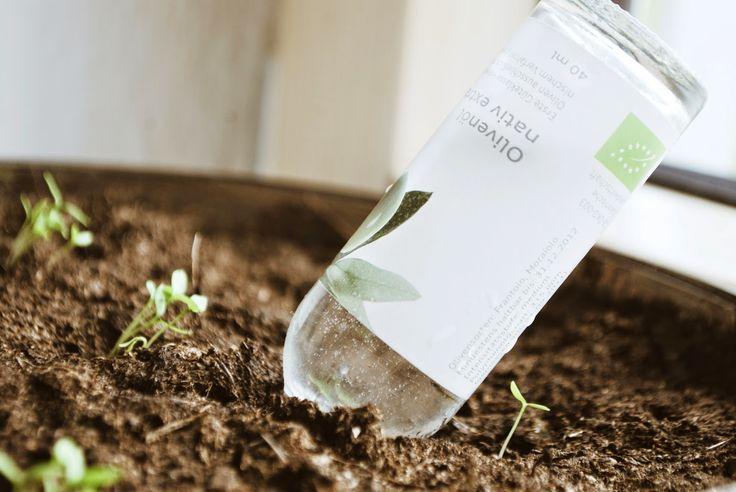 Ordnung zu Hause : Wie überleben meine Pflanzen die Urlaubszeit?