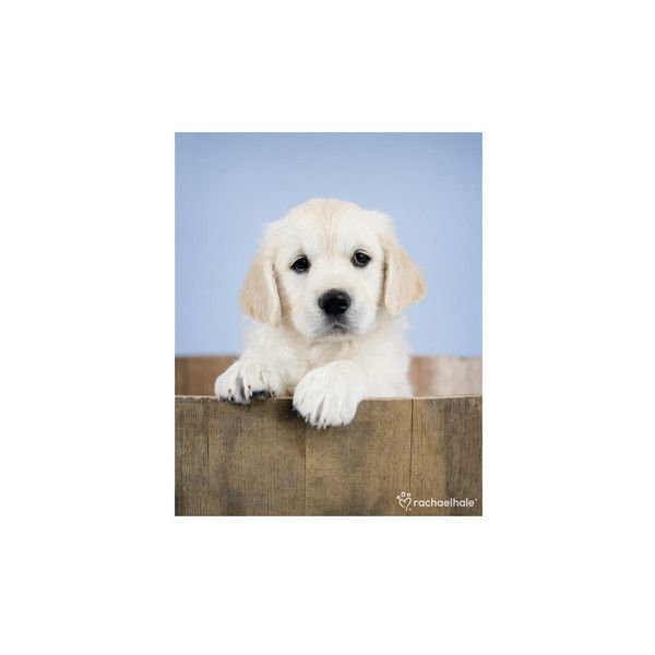 Brookby Photo (195 RON) ❤ liked on Polyvore featuring home, home decor, frames, puppy picture frames, dog picture frames, dog frames and dog home decor