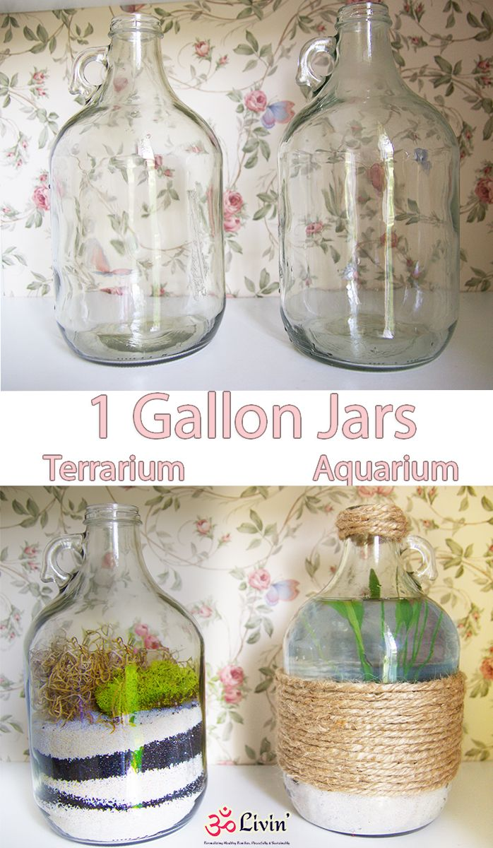Ever wanted to make a craft with One Gallon Glass Jars well now you can. Upcycle your jars to make a few Terrariums & Aquariums! Super quick and easy craft that will be a very unique addition to your home decor! Or give them away as little (or shall I say BIG) gifts!