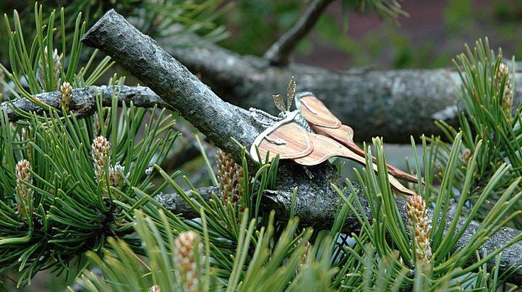 Luna Moth en nature ;)