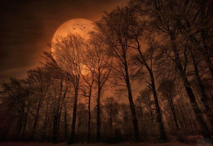 120 besten overnature de bilder auf pinterest wald - Meisterwerk tapeten ...