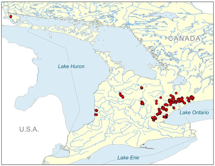 A map where Redside Dace minnow can be found in Ontario, Canada.