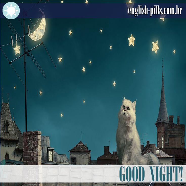 #goodnight #cat #boanoite #english #englishpills #inglês