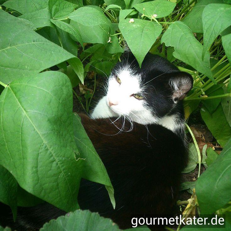 Tobi #cats #katze #gourmetkater