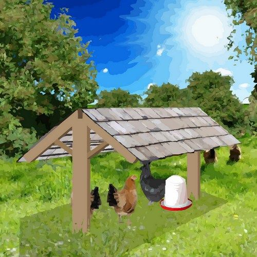 cet abri en bois facile construire sert de refuge aux poules pour se prot ger des ardeurs du. Black Bedroom Furniture Sets. Home Design Ideas