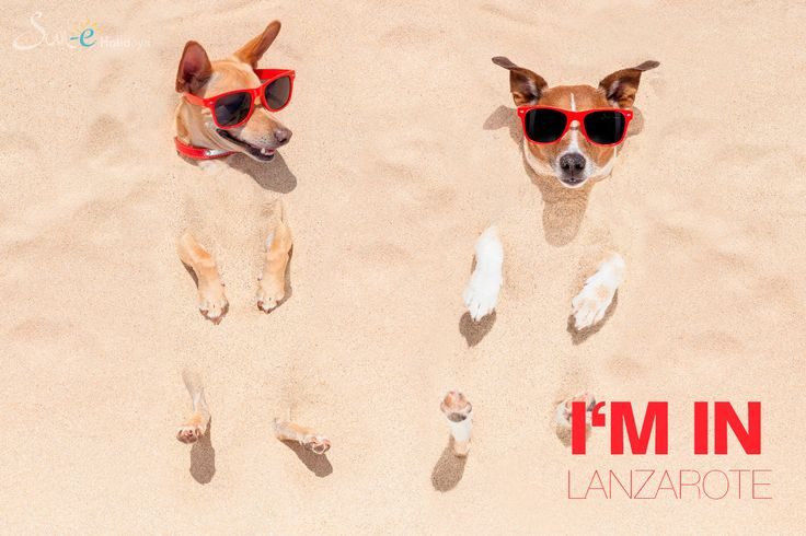 Did you know that 12% of #holiday makers #travel with their #pets to #Lanzarote.  http://www.lanzarotevillarentals.com