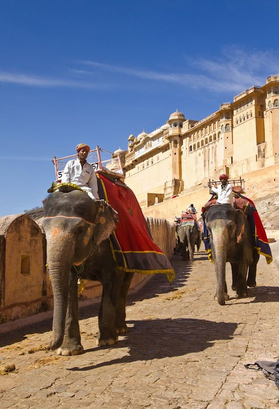 Elephants carrying tourists like Maharajas  to the Red Fort.  tourist packages  | tourist places of india | travel & tourism india