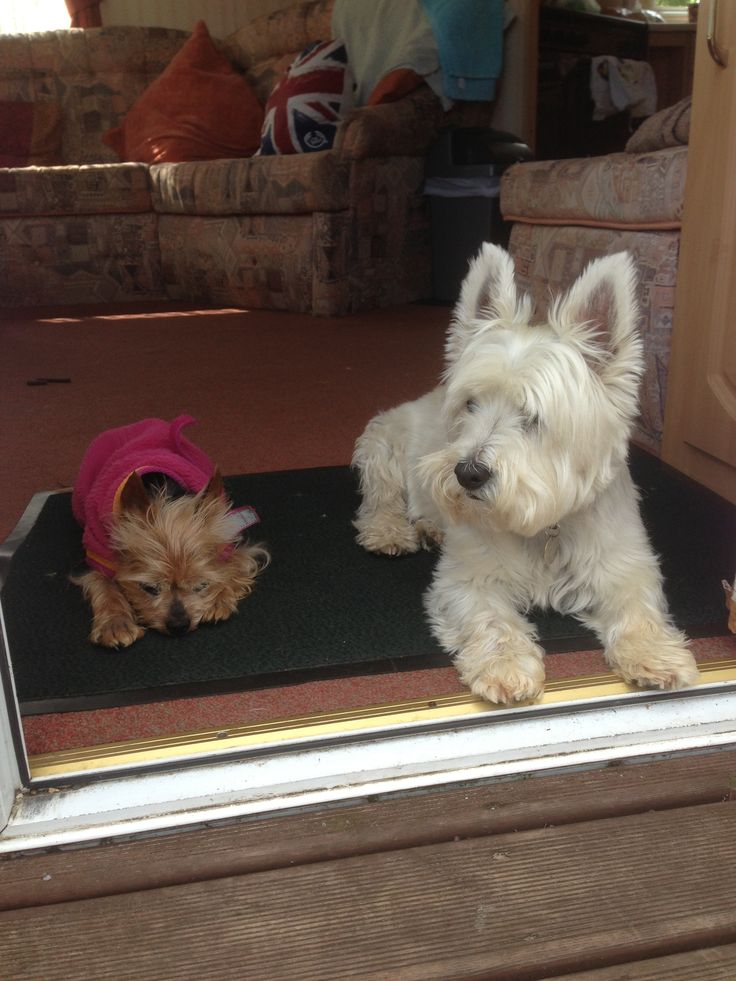 Dog Friendly caravan on Pinewoods
