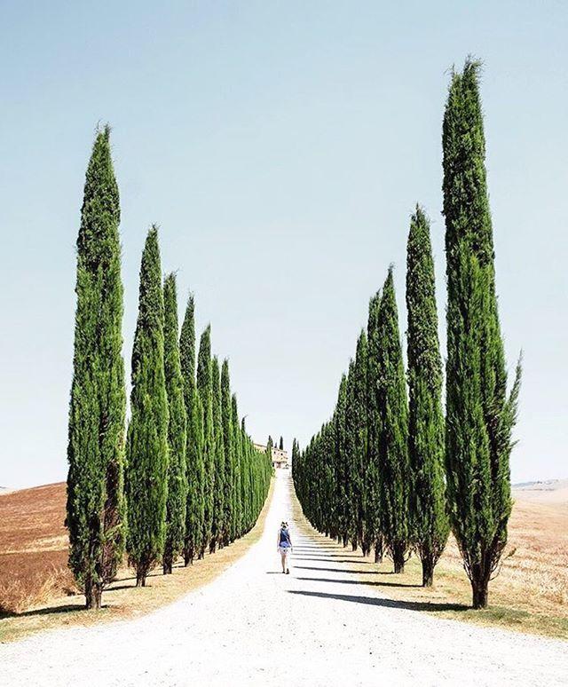 cypress in Toscana Italy captured by Darren Brogan (Scotland) Instagram @poetic_mouse