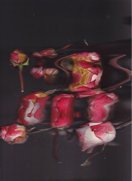 Many roses in a pile being moved while scanning. Give me credits if you want to repin these images. Please and thank you!