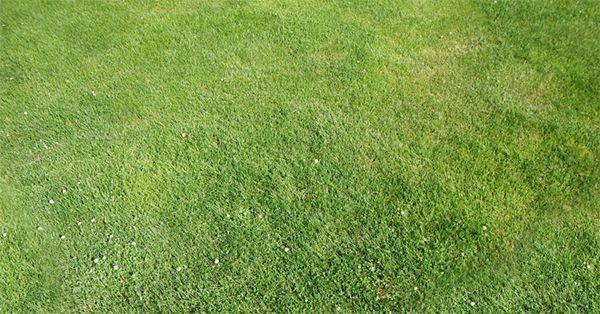 60 Best Photoshop Grass Textures Free Psd Download Free