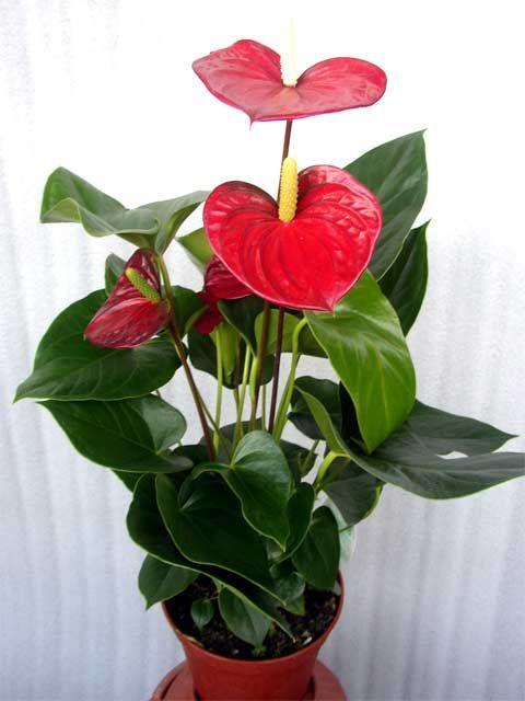 Полезные советы для комнатных растений
