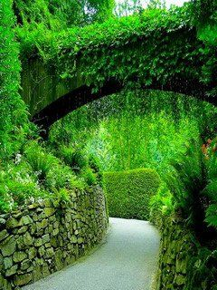 Download Free Green Cute Garden Mobile Wallpaper Contributed By Bradford