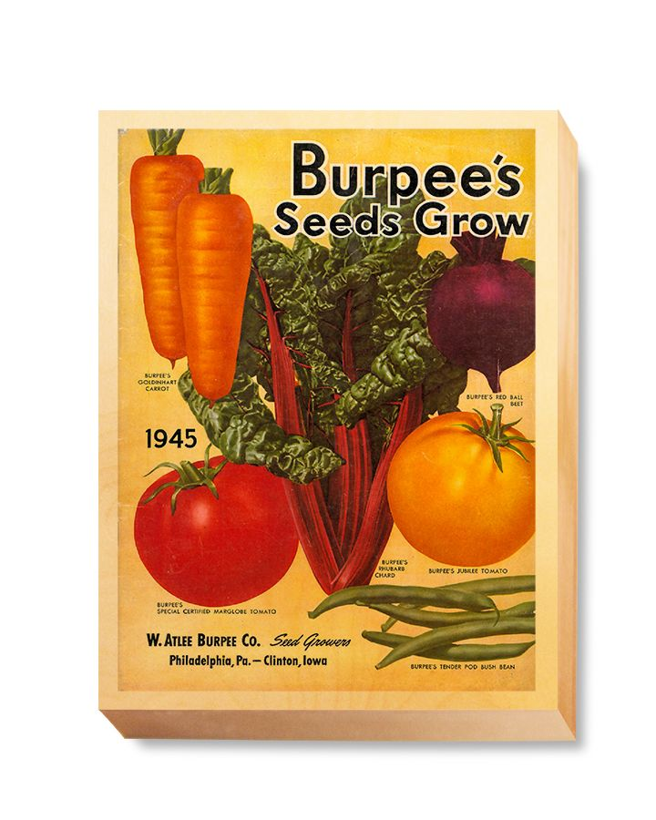 SEE 037 Seed Cover Art  -Burpees Seeds