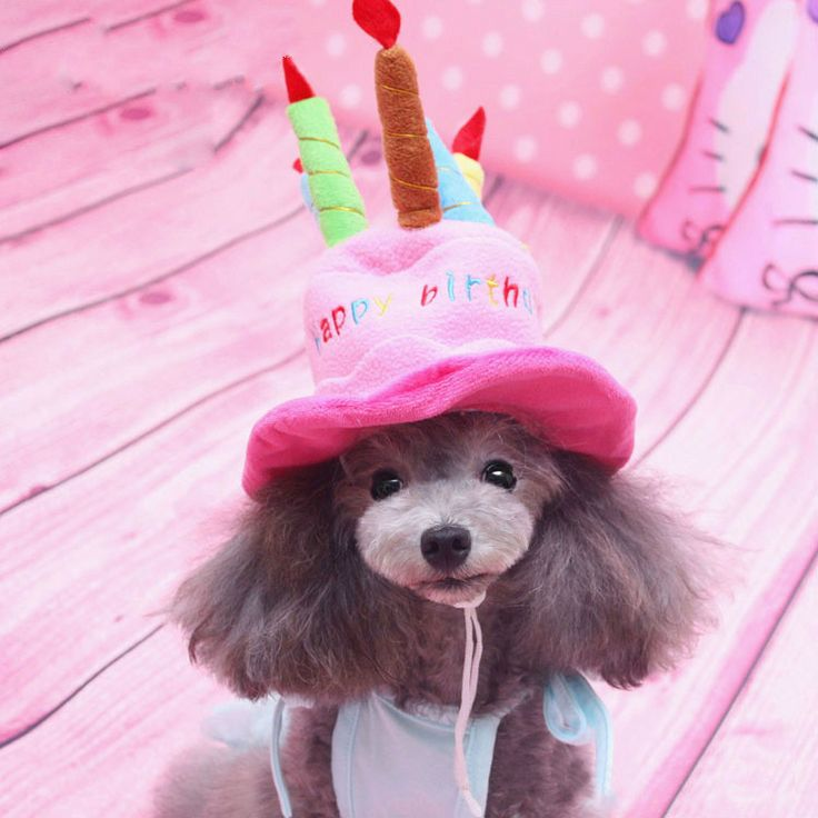 Birthday Cake Caps Pet Hat For Dogs Cats Wonderful Gift dog hats A Cake With Candles Shaped Dog Cap Size dog supplies