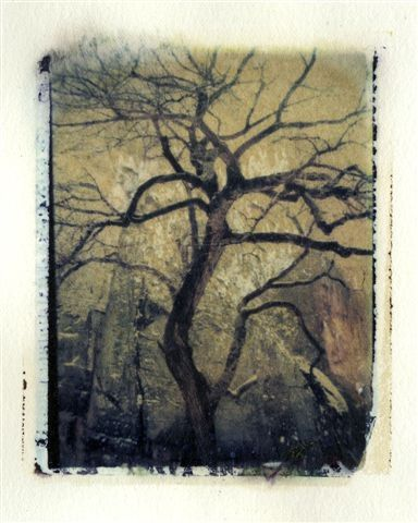 tree: Photo