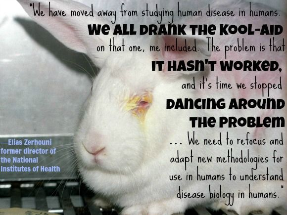 animal testing helps both humans and Studies published in prestigious medical journals have shown time and again  that animal experimentation wastes lives—both animal and human—and  precious.