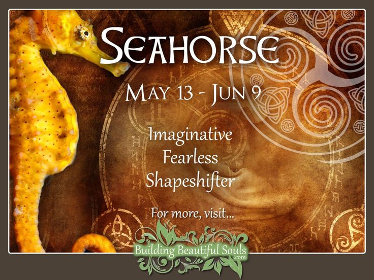 Seahorse Celtic Zodiac Sign - May 13 - June 9. Learn all about your Celtic Animal Zodiac meanings