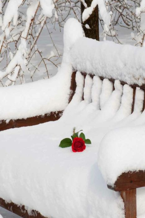 A bench where lovers sat perhaps in spring or summer.  Now he leaves a rose in the snow as a reminder of the love that he felt at this location.