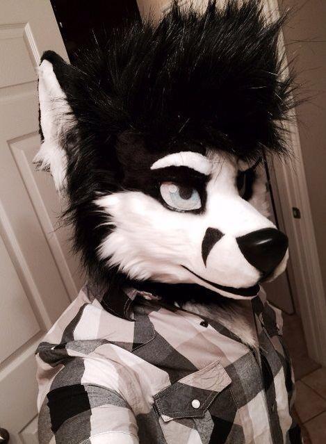 Wolf husky head