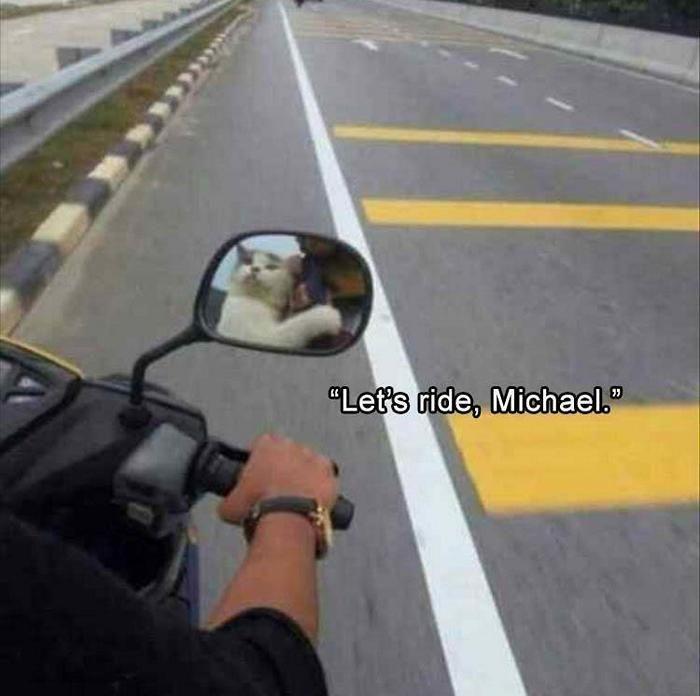 Günün komik hayvan resimleri – kaçık Picdump 8 (80 fotoğraf)