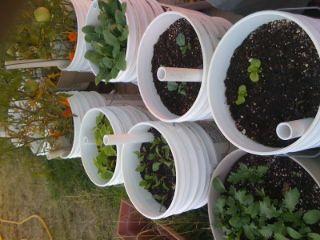 1000 Ideas About Self Watering Pots On Pinterest Self