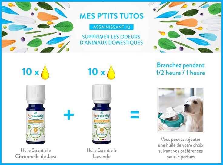 DIY : Supprimer les odeurs d'animaux domestiques avec les huiles essentielles
