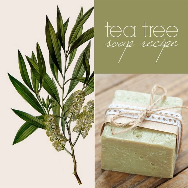 How To Make Tea Tree Soap