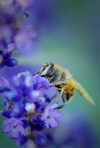 bee  | Call A1 Bee Specialists in Bloomfield Hills, MI today at (248) 467-4849 to schedule an appointment if you've got a stinging insect problem around your house or place of business! You can also visit www.a1beespecialists.com!