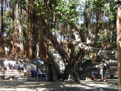 97 best favorite places images on pinterest bakersfield california banyan tree lahaina maui hi fandeluxe Choice Image