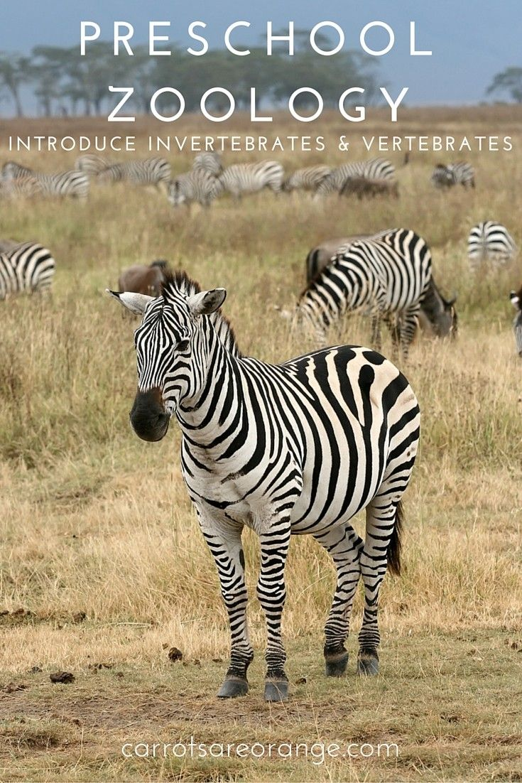 17 Best images about Vertebrates and invertebrates on Pinterest  multiplication, grade worksheets, worksheets for teachers, free worksheets, learning, and math worksheets Vertebrates And Invertebrates Worksheets For Kids 2 1102 x 735