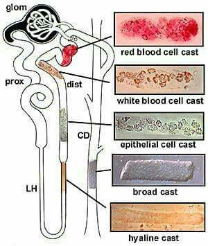 Where the stuff on the microscope slide comes from ......