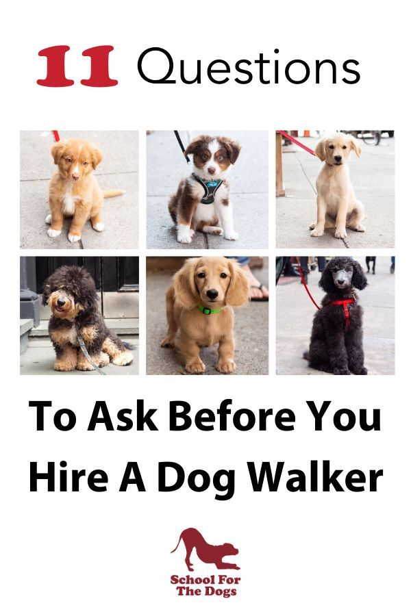 11 Questions To Ask Your Dog Walker In 2020 Dog Walker Dog