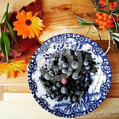 Frozen Blueberry, harvest time