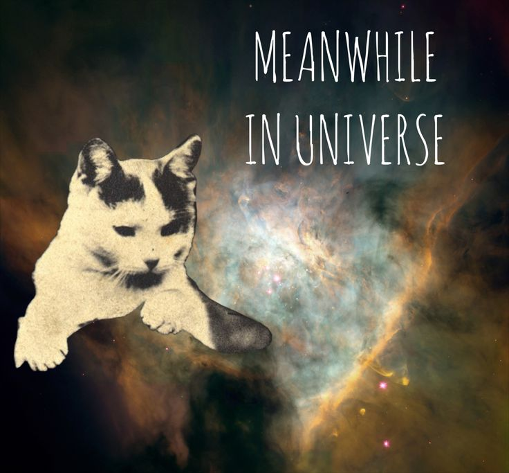 Natalia Krawczyk | My blog: johnkalennonka.com | You can share my works but I would appreciate if you add the author in your description   collage graphic design graphic art art universe cat stars meanwhile funny cats cats