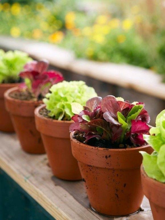 Grow Your Own Salad ,
