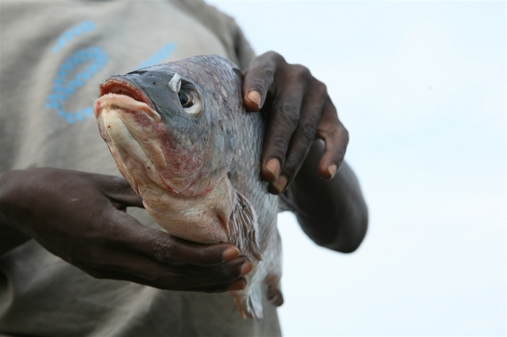 A fishermen displays a fish he has caught in Kasenyi, DRC