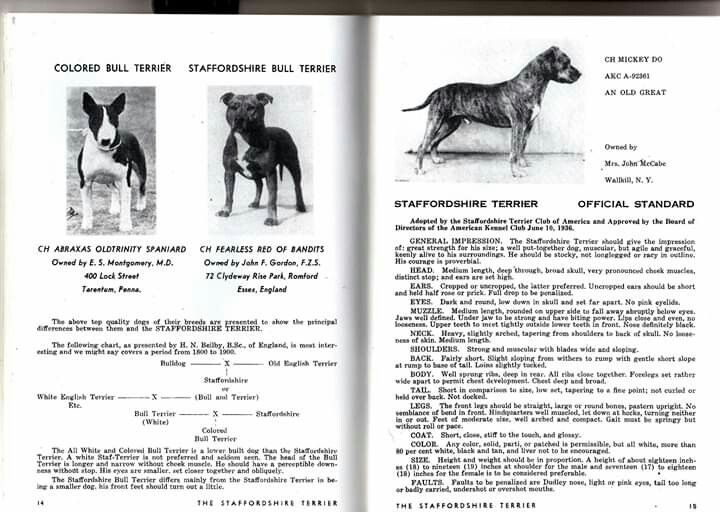 Pin By Tanja Njegovan On American Staffordshire Apbt Staffordshire Bull Terrier History Staffordshire Terrier American Pitbull Terrier Staffordshire Bull Terrier