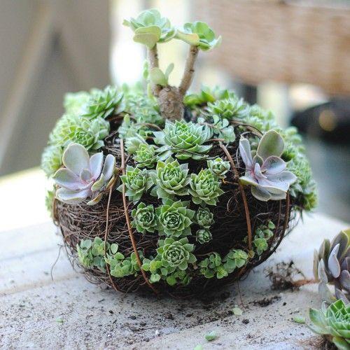 Trendy DIY Succulent Pumpkin   Shelterness