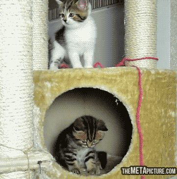 He forgot how to cat… ;)