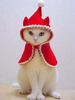 pets dressed up for christmas | ... animal photos cat dressed up in red outfit for christmas maybe elf
