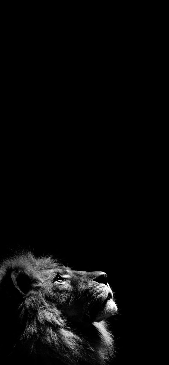 50 خلفية سوداء للايفون Animal Wallpaper Animated Love Images Instagram Photo Ideas Posts