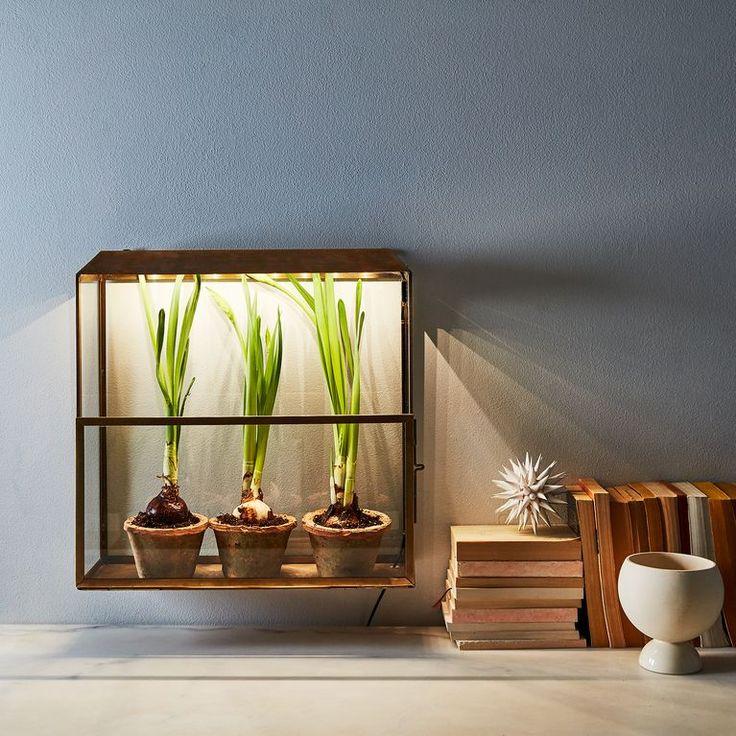Brass Grow-Anywhere Growhouse. No sunlight? No problem!