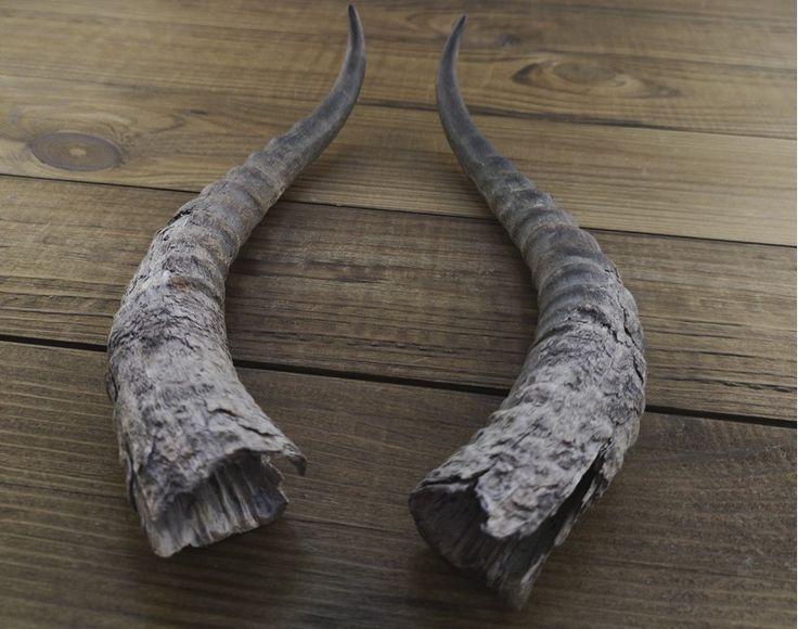 fetish Antelope horn