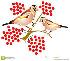 Image result for illustrated birds